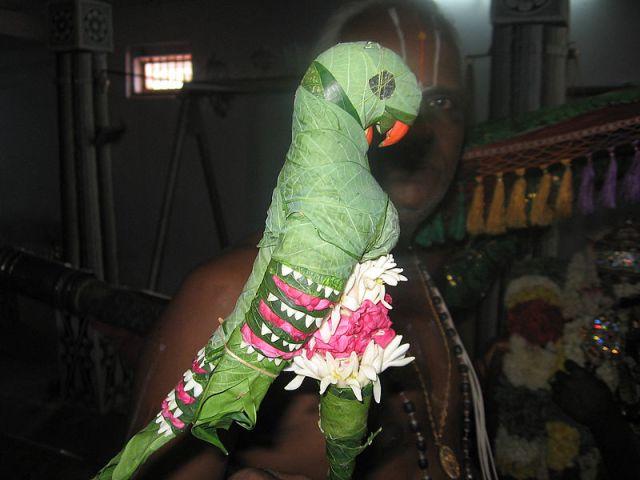 800px-Parrot,_Srivilliputtur