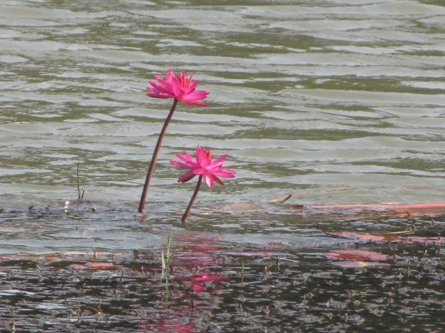 kazhiyur kolam 2