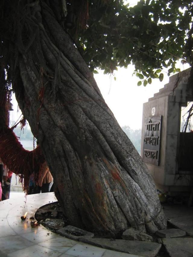 bhagavad gita tree