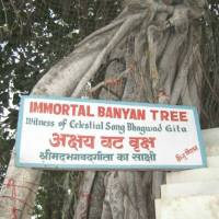 The immortal banyan tree at Kurukshetra