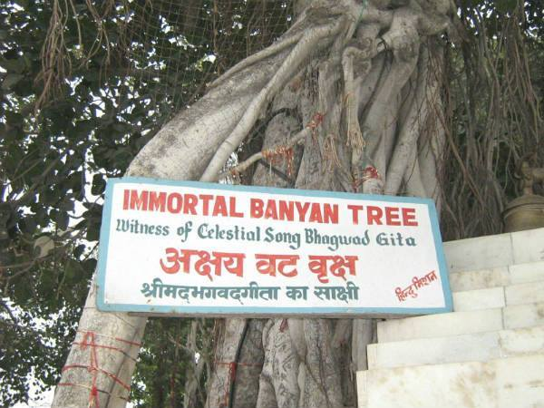Image result for tree in Kurukshetra
