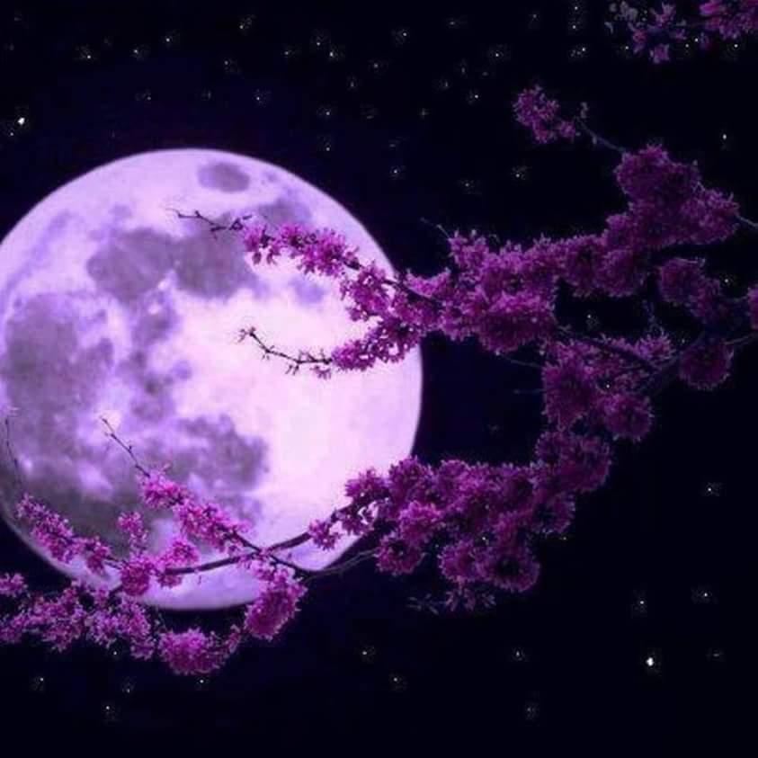 wp-1480341372524.jpeg